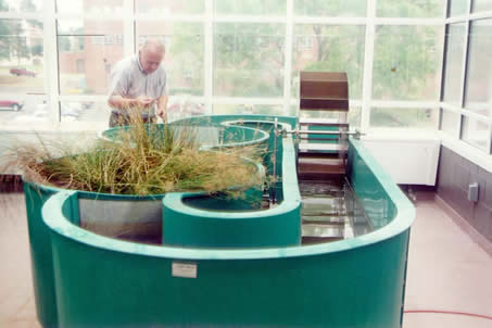 vegetation in aquatic lab